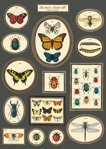 Cavallini Poster Natural History Butterflies & Insects
