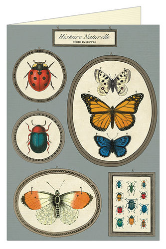 Cavallini Aktenmappe Butterflies & Insects